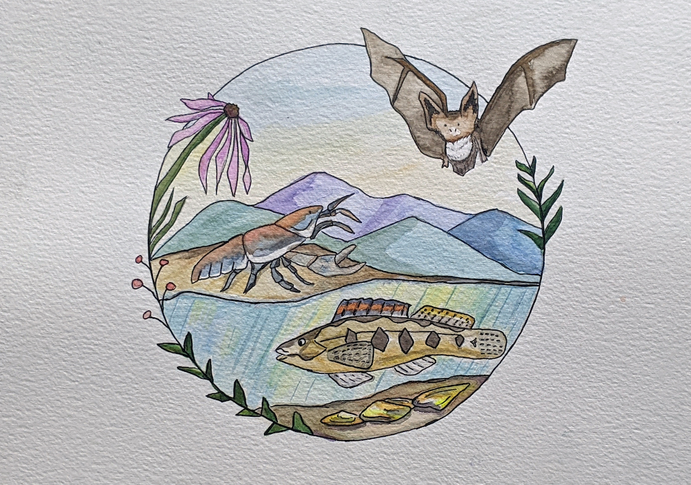 painting of smooth purple coneflower, northern long-eared bat, Big Sandy crayfish, Roanoke logperch, and yellow lance mussel
