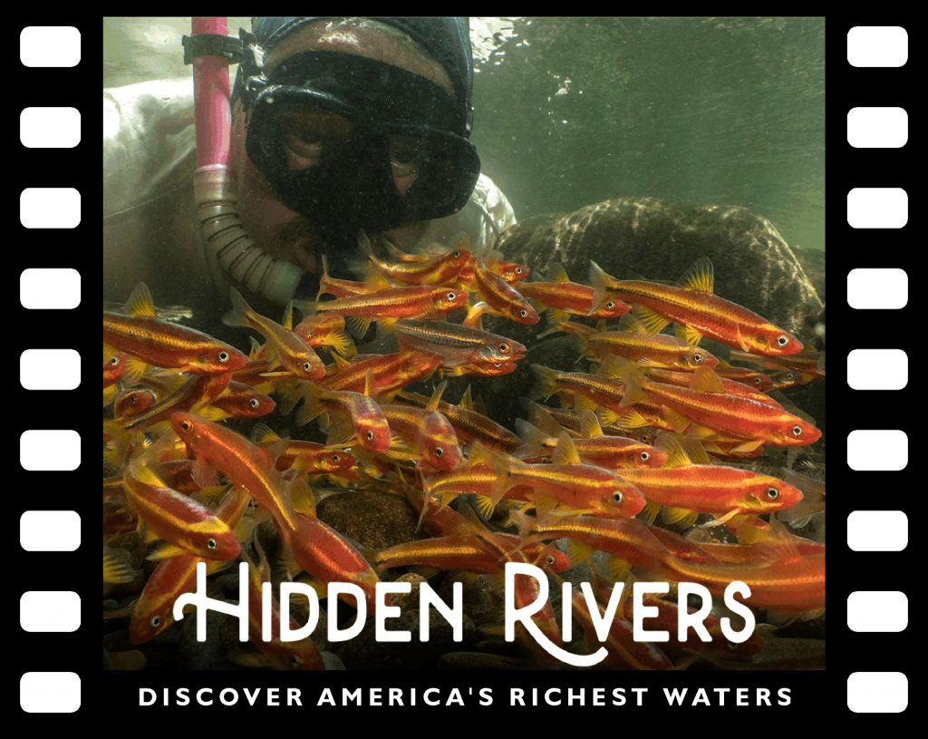 Casper Cox's face, in a snorkel mask, above a colorful mass of orange, red and yellow fish.