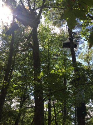 Tree-sit