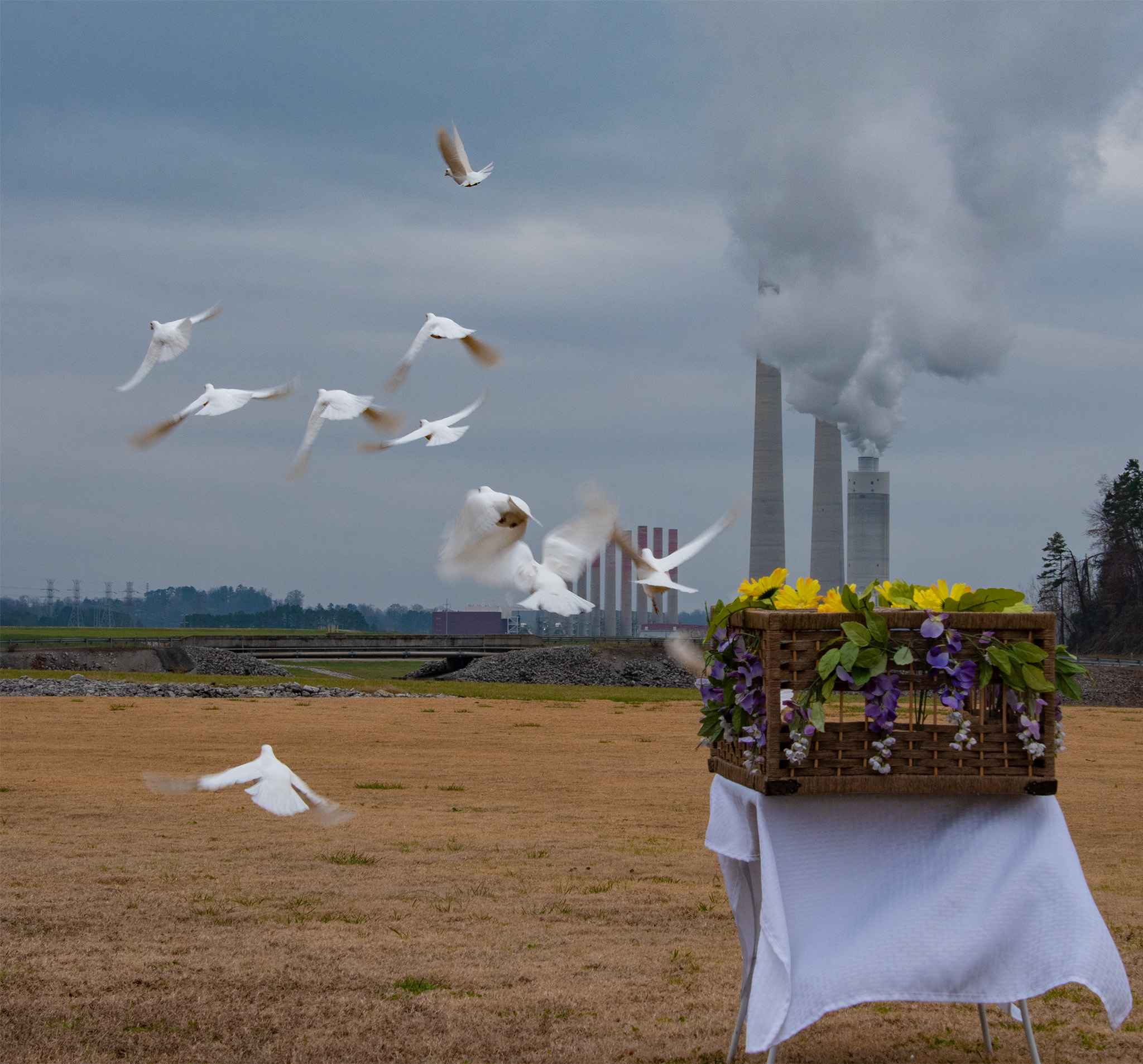 white doves released in front of Kingston fossil plant