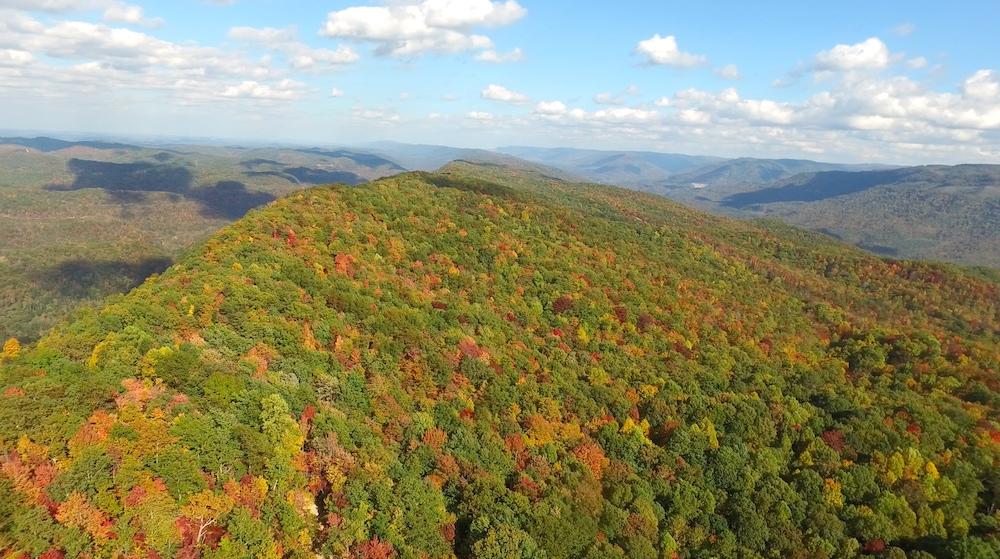 Warbler Ridge Preserve