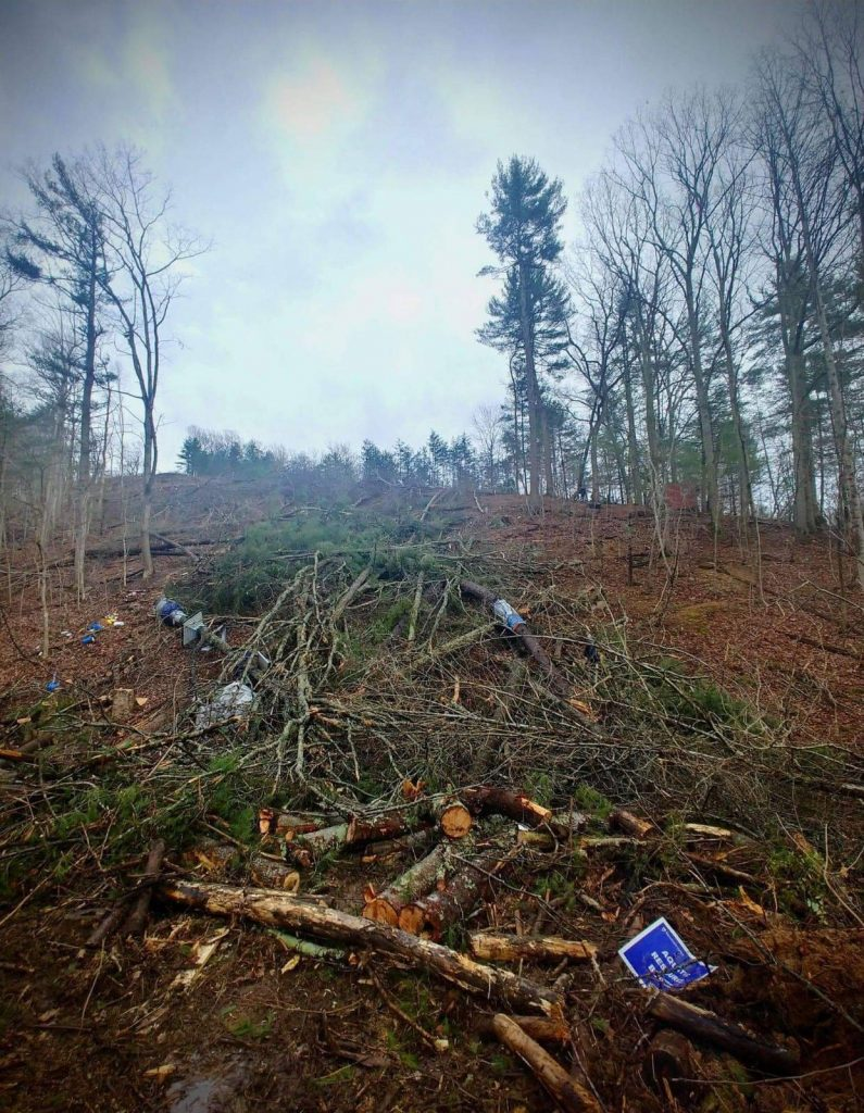 felled trees on the ground in path of MVP
