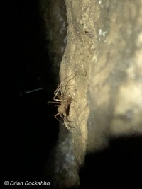 tiny light-brown spider on similarly colored rock
