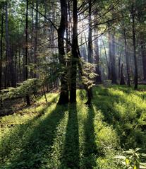 HIDDEN TREASURES #2 - South Carolina > Appalachian Voices
